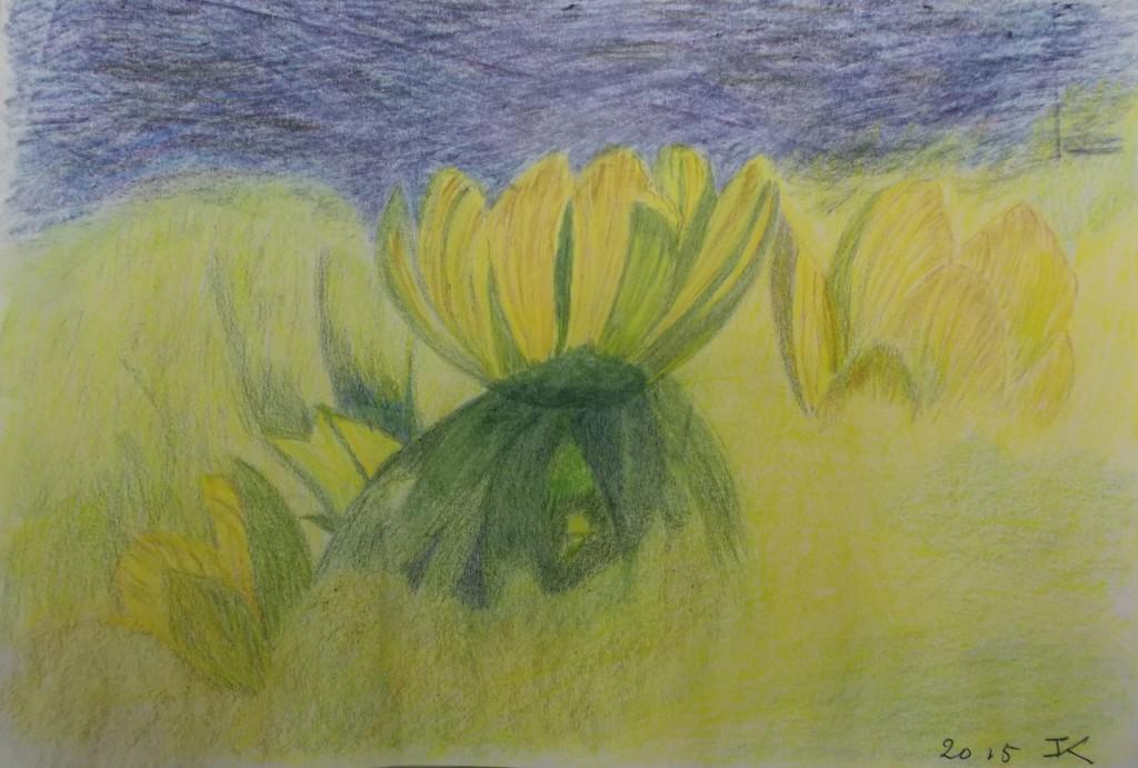 Kleurpotlood, 18 x 24 cm
