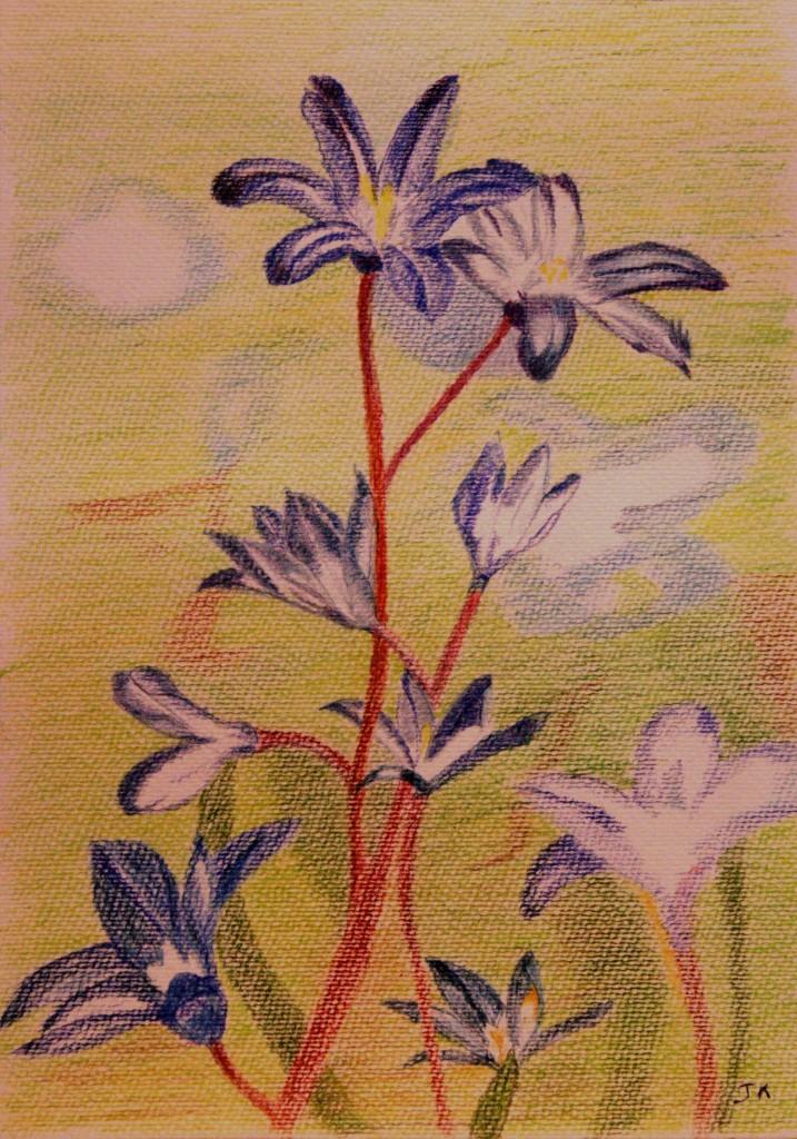 kleurpotlood op aquarelpapier 26x37 cm